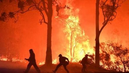 Firefighters battling a forest fire.