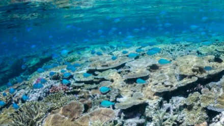 An underwater photograph of a vibrant section of coral reef, teaming with light-blue coloured fish.