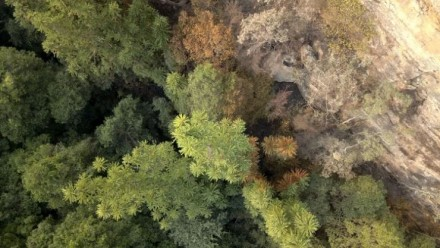 An aerial photograph of the main Wollemi Pine grove in the Wollemi Pine National Park, after the 2019-20 bushfires.