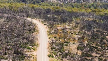 An aerial photograph of a road running through a burnt-out area of forest.