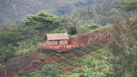 A farm on a slope in Papua New Guinea.