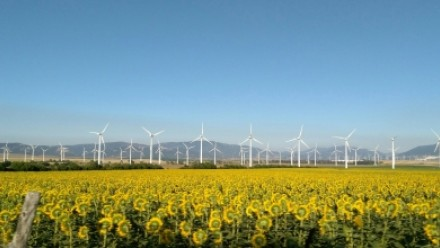 A field of sunflowers underneath a clear blue sky, with wind turbines in the background.