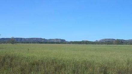 A grassy green field in Arnhem land under a bright blue sky.