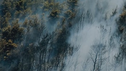 An aerial view of a forest shows smoke billowing up from beneath the trees.