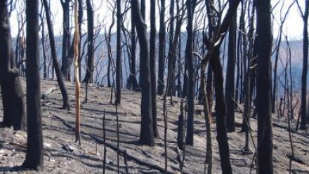 A burnt area of forest.