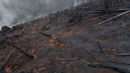 The charred remains of a forested area after a bushfire.