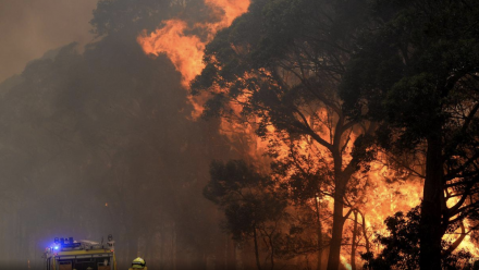A firefighter tackles a bushfire blaze.
