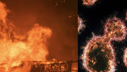 An image of bushfires, and a close-up of the coronavirus