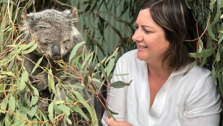 Kristy McBain, Member for Eden-Monaro, with a rescued koala in a shelter