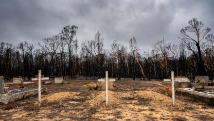 A photograph of three white wooden crosses marking graves in a burnt out area of land in Morton National Park.