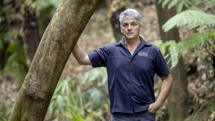 An image of Prof David Lindemayer in an area of forest, leaning against a tree with one hand in his pocket.