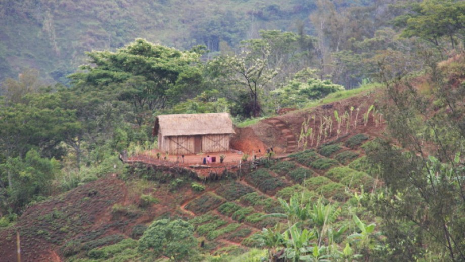 Farming on a slope in Papua New Guinea