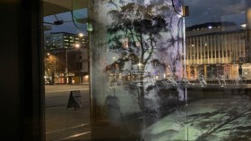 A photograph of a gum tree shrouded in mist is projected onto a wall in Canberra's city centre.
