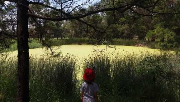A child standing in front of a pond with an algal bloom