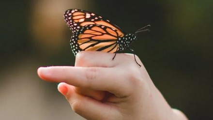 A photograph of an orange and black butterfly landed on someone's hand.