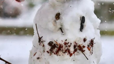 A photograph of a snowman with sticks for arms, and tanbark for eyes and a mouth.