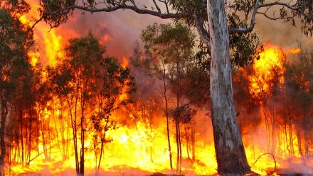 A photograph of a bushfire ranging through a forest.