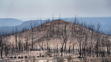 A photograph of a small hill covered in burnt trees.