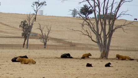 Drought in Wagga. Image:  Flickr John Schilling