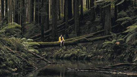 A person sites on a fallen tree in the middle of a forest.