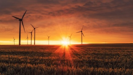 The sun sets between wind turbines in a field.