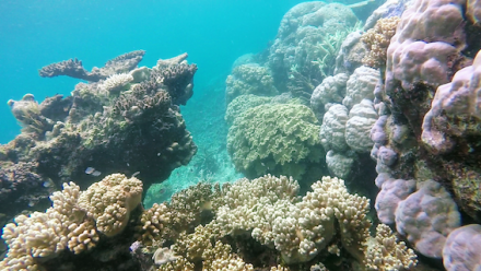 A photograph of coral on the Great Barrier Reef.