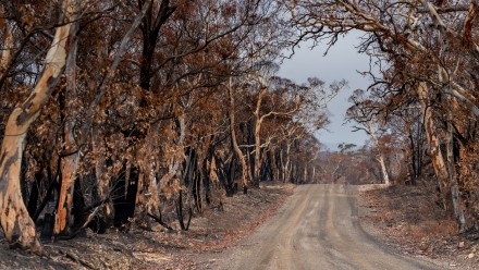 A photograph of a dirt road leading through a burnt area of bushland.
