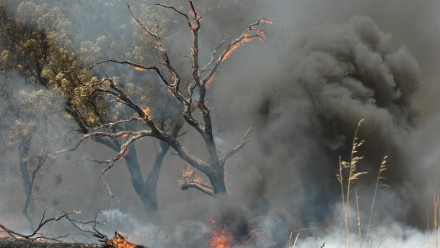 A photograph of a tree going up in flames in a bushfire, with thick smoke billowing behind it.