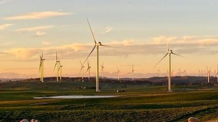 A photograph of a field filled with wind turbines and a few grazing sheep, with a sunset sky in the background