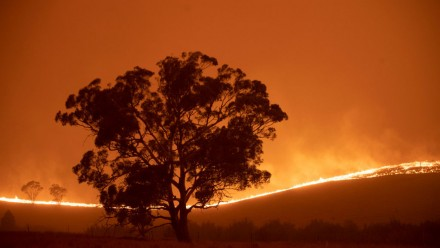 A photograph of a large tree, silhouetted against an orange sky and impending bushfire.