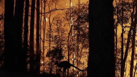A photograph of a kangaroo jumping through a forest, with a bushfire burning in the background.