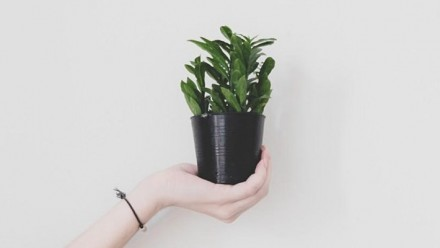 A photograph of a white background, with a hand reaching in from the left-hand side, holding a pot plant.