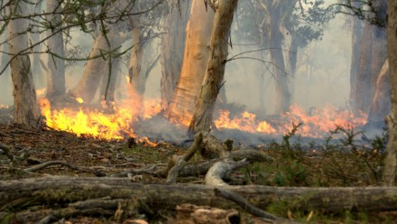 A photograph of a low-burning fire moving across the ground in a section of Australian bushland.