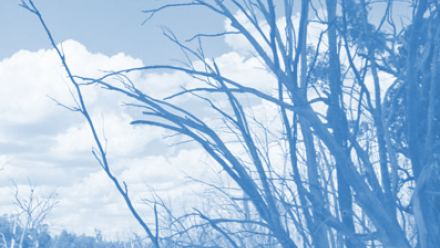An image with a blue tint of dead trees on the side of a river.