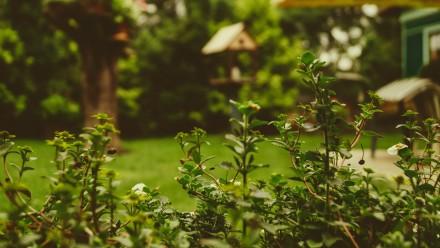 A photograph of a green hedge within a lush green garden.