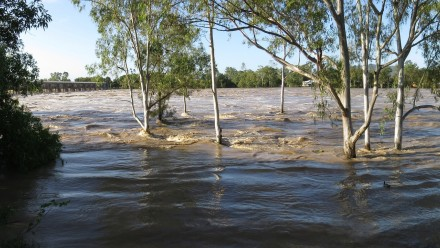 Trees and flood waters. Photo: Pixabay