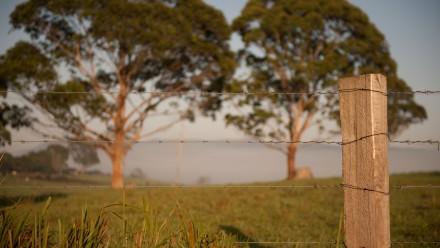 Australian farm barbed wire fence. Photo: Shutterstock