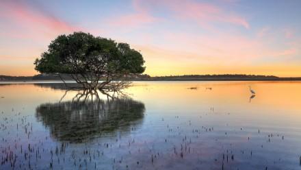 Wetlands with egerat. Photo: Shutterstock