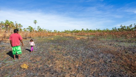 An indigenous Australian man from the Kandiwal community accompanied by his child walk through country burnt by traditional fires.