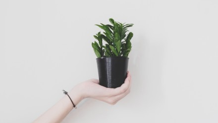 Hand and plant. Shutterstock.